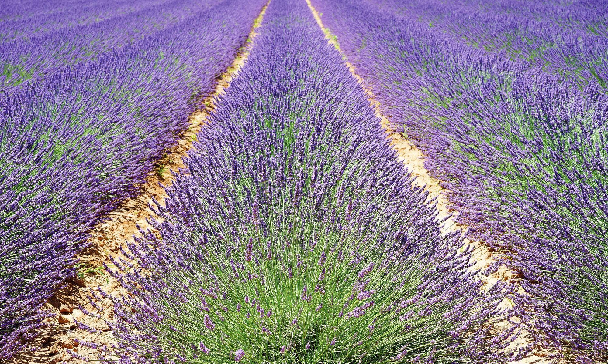 Jésuites en Provence